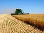 Властями Камчатки поддерживается сельское хозяйство
